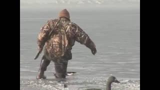 Охота на гуся. Дельта Дуная.