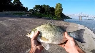 White  Bass Breakfast, Catch and Cook