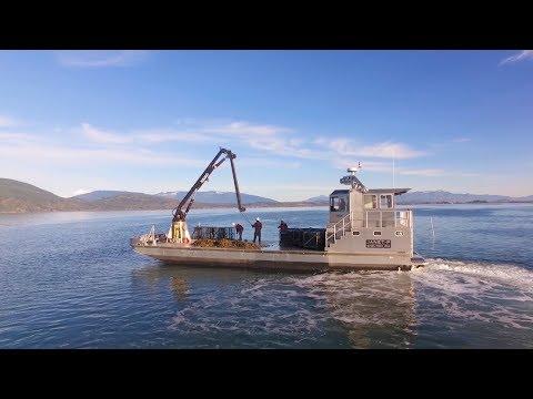 Port Of Seattle | Taylor Shellfish Farms | Seattle Video Production - Creative Media Alliance