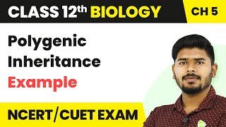 Example of Polygenic Inheritance | Principles of Inheritance and Variation | Class 12th | Biology