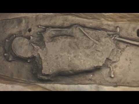 Jamestown Chancel Burial D 170C Pan
