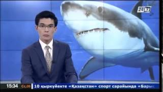 В Австралии жертвой акулы стал 40-летний серфингист(, 2014-09-09T09:48:43.000Z)