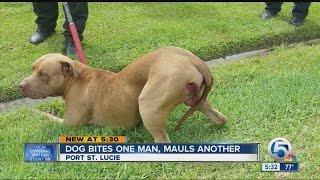 Dog bites one man, mauls another