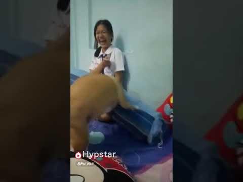Anjing Mesum Sama Pelajar SMP