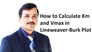How to Calculate Km and Vmax using Lineweaver Burk Plot