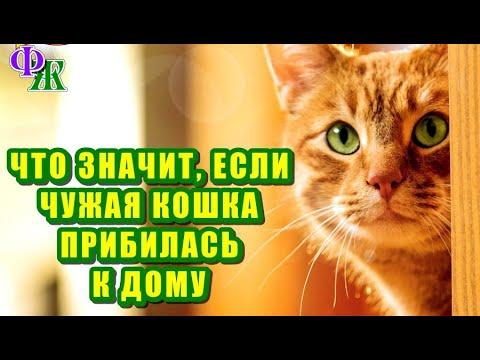 Вопрос: Как поступать, если Кот гоняет чужую кошку?