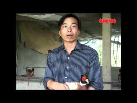 chim trĩ đỏ, chim công và gà đông tảo giống .mp4