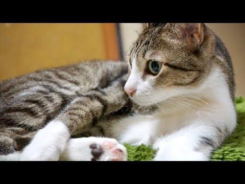 猫のイス取りゲーム