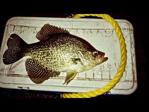 Giant Crappie Ice Fishing Catch and Cook!!!