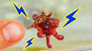 12 маленьких животных, к которым не стоит прикасаться