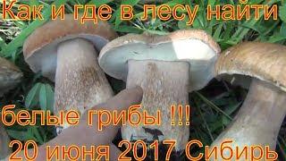 Поход в лес белые грибы ищем по запаху 20 июля 2017 белый гриб легко найти тайга природа выживание