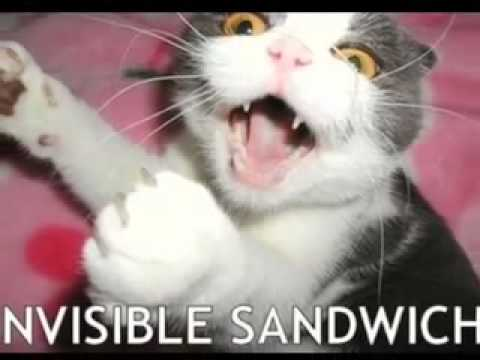 Funny kitties - YouTube