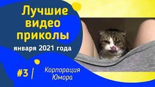 Самые смешные ролики до слез лучшие приколы 2021 смешное видео январь 2021 года ржака 3