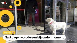 Hond wacht dagen op z'n baasje voor het ziekenhuis