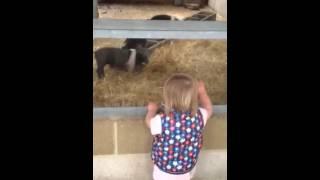 Cerys odds farm Thumbnail