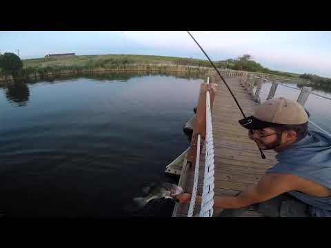 Big Bass At The Rocky Mountain Arsenal, Colorado Bass Fishing