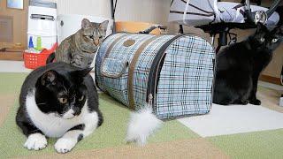 猫たちの新しいお友達を初めて会わせてみました♪