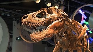 Discovering and understanding a new type of dinosaur | UNC-TV Science