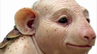 वैज्ञानिको ने बनाए ५ अजीबो गरीब प्राणी..देखकर यकीन नही करोगे