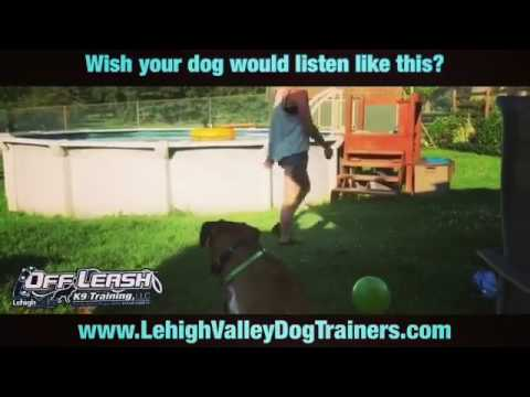 Does your dog listen like this? ||| Lehigh Valley Dog Trainers: Off Leash K9 Training