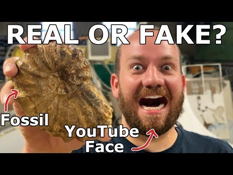 Ammonite Fossil - Real or Fake - Waterjet Cut in Half