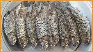 How To Cut Swamp Barb Fish Easily At Home   Freshwater Fish Processing   Fish Cutting At Home