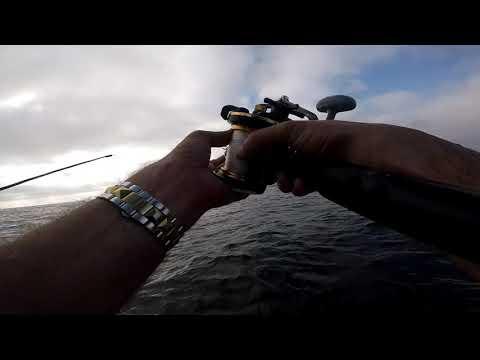 Freedom Sportfishing - Tuna Trip