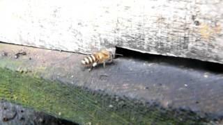 Baz's hobbies - 13S -Vietnam bees / beekeeping