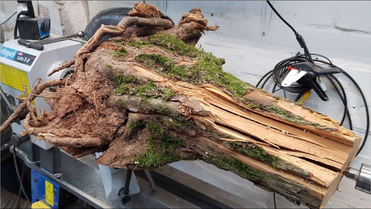 Woodturning - Hawthorn Root Lamp