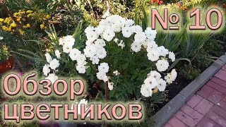 Обзор  цветников №10 (11.08.2018). Хризантемы мультифлора, гортензии, розы, альстромерия