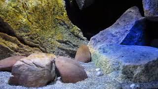 Aquarium Malawi 300l mit Back To Nature Modulen
