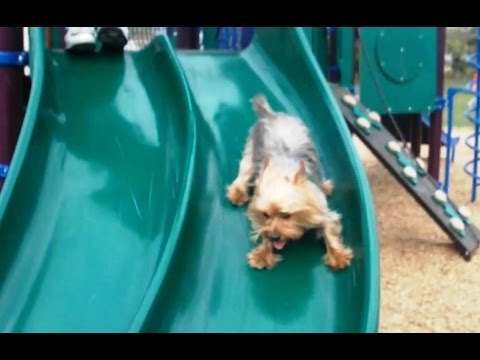 Puppies Playing on Slides Compilation