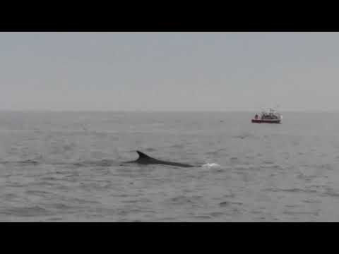 Cap'n Fish's Whale Watch, Boothbay Harbor Maine, August-2017