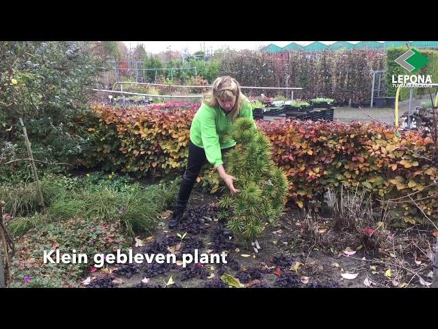 Tuintips: winterklaar maken van uw tuin