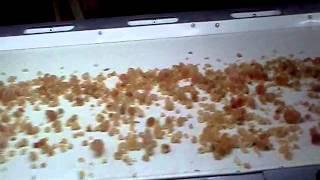 Gum Arabic Conditioning In Sudan
