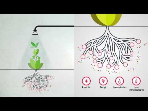Foliar Feeding - Highly Effective Plant Nutrition