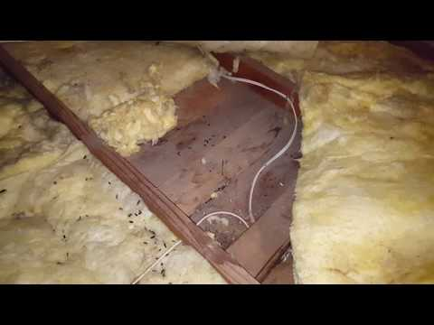 RODENT DAMAGE - stop rodents from burning down your home