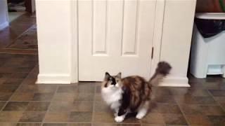 Cat Sit Pretty