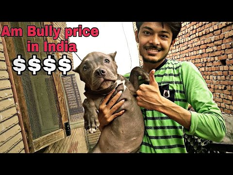 dog-training-course-for-you.dog-ko-train-kaise-karen??-||-am-bully-price-in-india-||-review-reloaded