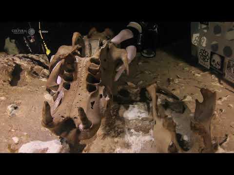Descubren en México un perezoso gigante de miles de años de antigüedad