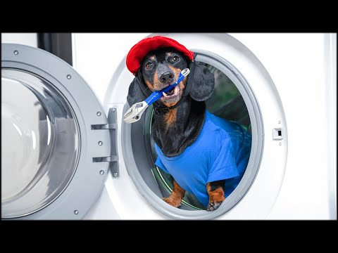 Super Plumber Brother! Cute & funny dachshund dog video!