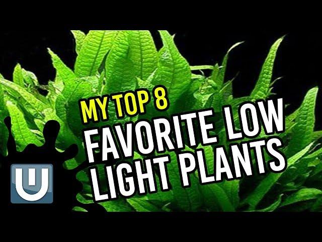 Low Light Aquarium Plants - My No Fail Top 8 Favorites