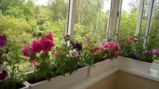 видео Зимний сад на вашем балконе