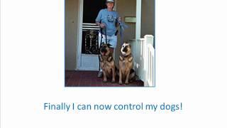 Secrets To Dog Training + Bounces