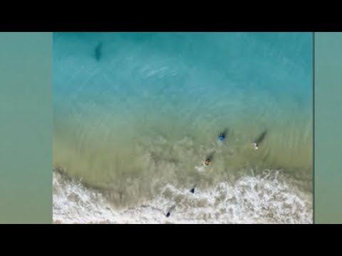 Big Rig - Florida Dads Drone Spots Large Shark Coming Towards Kids, Takes Action