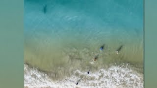 Drone captures shark lurking close to family