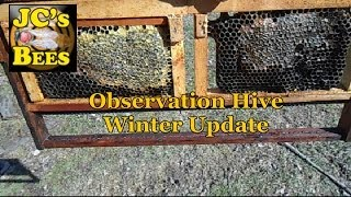 Observation Hive Winter Update