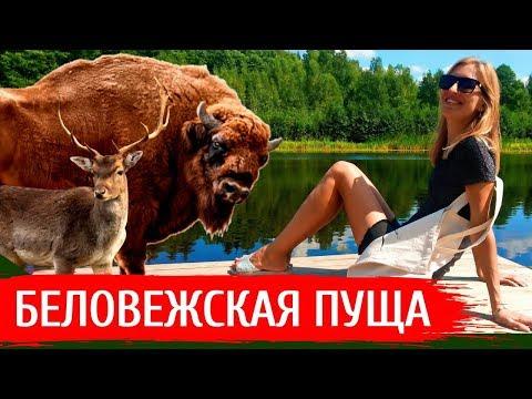 БЕЛОВЕЖСКАЯ ПУЩА: Что посмотреть, экскурсии, цены, обзор заповедника | Беларусь 2019