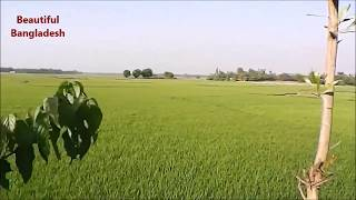 Beautiful Bangladesh - Rice Fields - HD