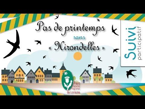 """Suivi participatif  """"Pas de printemps sans Hirondelles"""""""